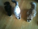 고양이들의 아침식사 (놀숲, 네바)