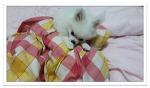 ♡강아지 폼피츠[포메라니안+스피츠] 179일생♡ 강아지가 좋아하는 것들~