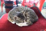 영종도 조개구이집에서 만난 고양이