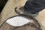 속초에서 광어 루어 낚시 3 마리