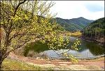 ( 의성 여행 ) 의성 산수유마을 (산수유 축제 )