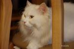 고양이 돌잔치에 초대받은 조연 고양이.