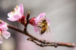 봄의 소식