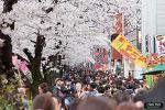 나카메구로 벚꽃축제 (中目黒桜まつり)