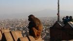 네팔 불교 성지 '스와얌부나트사원'을 찾다