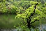 청송 여행 / 사진작가들이 꼽은 한국의 10대 비경 청송 주왕산 주산지