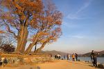 [양평 / 두물머리] 남한강과 북한강이 만나는 곳, 두물머리에서 만추를 만나다 # 두물머리 둘레길 # 할로윈데이 2017