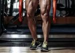 다리근육과 기능 : 기시, 정지, 신경지배