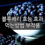 블루베리 효능 효과 부작용 먹는방법