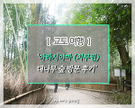 [교토 여행]자연의 숲이 주는 힐링, 아라시야마 치쿠린 대나무숲 방문 후기