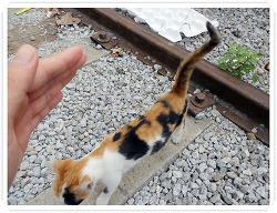 군산 경암동 철길마을에서 만난 새끼고양이