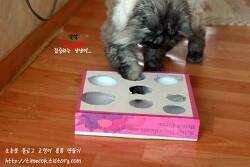 고양이 장난감 만들기 땡전한푼 필요없이 피자박스로 만든 고양이 장난감 용품