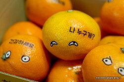 일상속의 작은 행복~ 카카오파머 제주 감귤~!