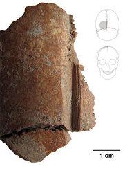 [번역] 홈이 파인 두개골이 고대 석전(石殿)에서 발견되다, <Science News>, 2017