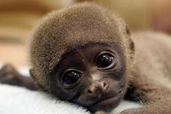 온라인서베이,survey monkey, 온라인설문조사 작성 사이트,서베이몽키 이용방법
