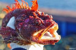 [우리 식탁 위의 수산물, 안전합니까?] 방사능에 오염된 바다, 수산물을 건강하게 먹는 방법