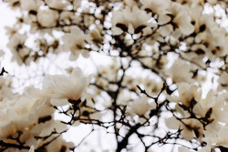 그리고 다시 봄