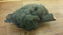 버섯 감정의뢰들어온 사진 (산원초)