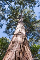 호주 서부 - 펨버튼 글로스터 국립공원