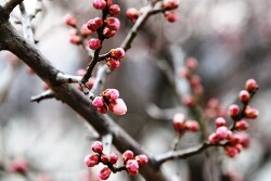[경주] 봄꽃여행