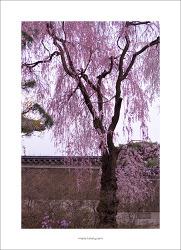 #06. 창덕궁[昌德宮]의 봄