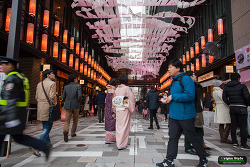 日本橋桜フェスティバル (Nihonbashi Sakura Festival)
