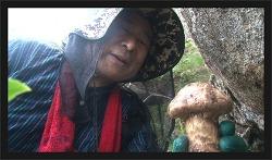 ebs 극한직업 자연산 버섯을 찾는 사람들 편