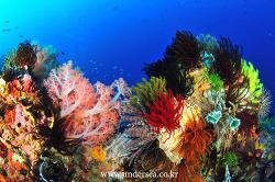 soft coral & cronoid, Komodo Indonesia