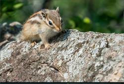 동물 - 22 (다람쥐, 두꺼비, 고양이)
