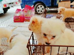 성남 모란시장에서 개와 고양이 구경했습니다.