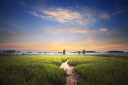 습지의 새벽, 습지의 오후 - 소래생태공원 8월 중순