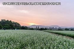 경주 황룡사지 메밀꽃 피어있는 풍경, 9월에 가볼만한 경주 추천 여행지