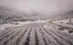 지식인 농부 고평규, 굿베리팜에서 농촌의 미래를 생각하다. by 포토테라피스트 백승휴