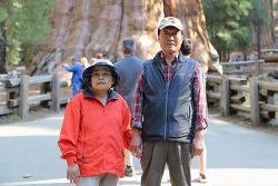 부모님과 세쿼이아/킹스캐년 국립공원 1박2일 둘쨋날, 콩그레스트레일(Congress Trail)을 완주!