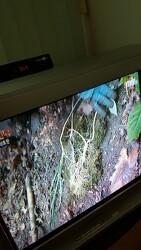 산원초 산삼감정 의뢰 기록