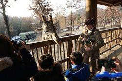 겨울방학 체험학습은 에버랜드 동물원 '생생체험교실'에서!