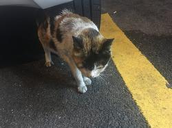 [고양이] 길에서 만난 삼색냥이와 집고양이