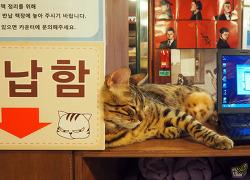 홍대 만화&고양이 카페데코믹스