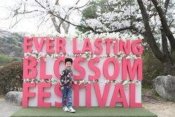 벚꽃나무 아래 7살 아들과 데이트~ @용인에버 벚꽃축제!