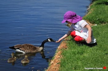[캐나다여행/오타와] 아이와 동물의 깜찍한 교감