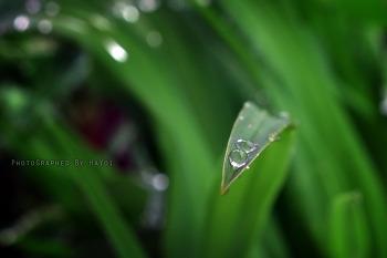 물방울 놀이 [15pic]