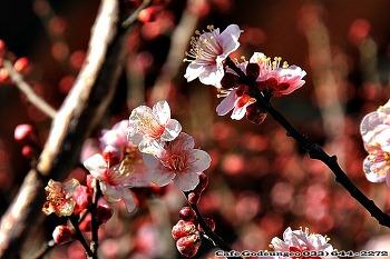 매화,산수유 꽃이,봄이오는 길목에서....