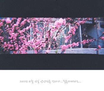 [2011년 4월 16일 안양천] 안양천을 걷다가.. 이쁜 꽃이 있어서...