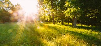 도심 속 힐링 스팟! 소확행을 위한 아름다운 도시 숲 BEST 5