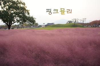 경주 핑크뮬리