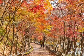 함안 입곡군립공원 단풍 터널, 가을 햇살이 너무 좋았던 날