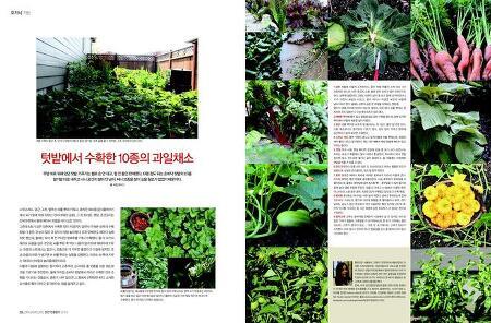 텃밭에서 수확한 10종의 과일채소
