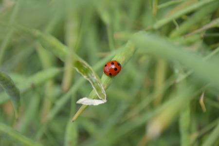 (가칭) 보령 토종.자연재배 꾸러미 협동조합- 계속작성 중