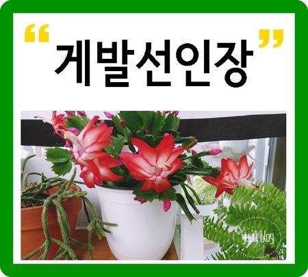 게발선인장 키우기  :-)