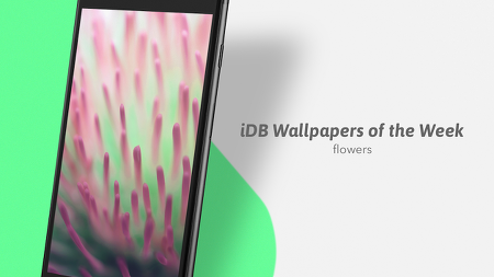 iDB 이번주 아이폰 배경화면 : 꽃